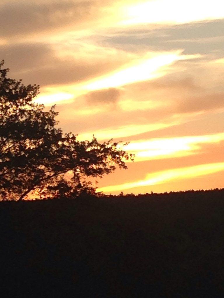 Sun set in the backyard